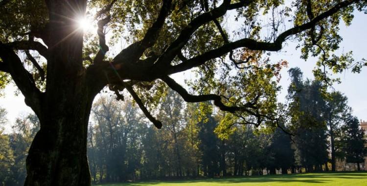 Monza_Parco Villa Reale-2~01